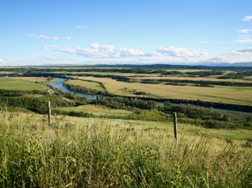 Southern Alberta Water Conservation Strategies Public Consultation